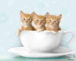 coffee cup kitten
